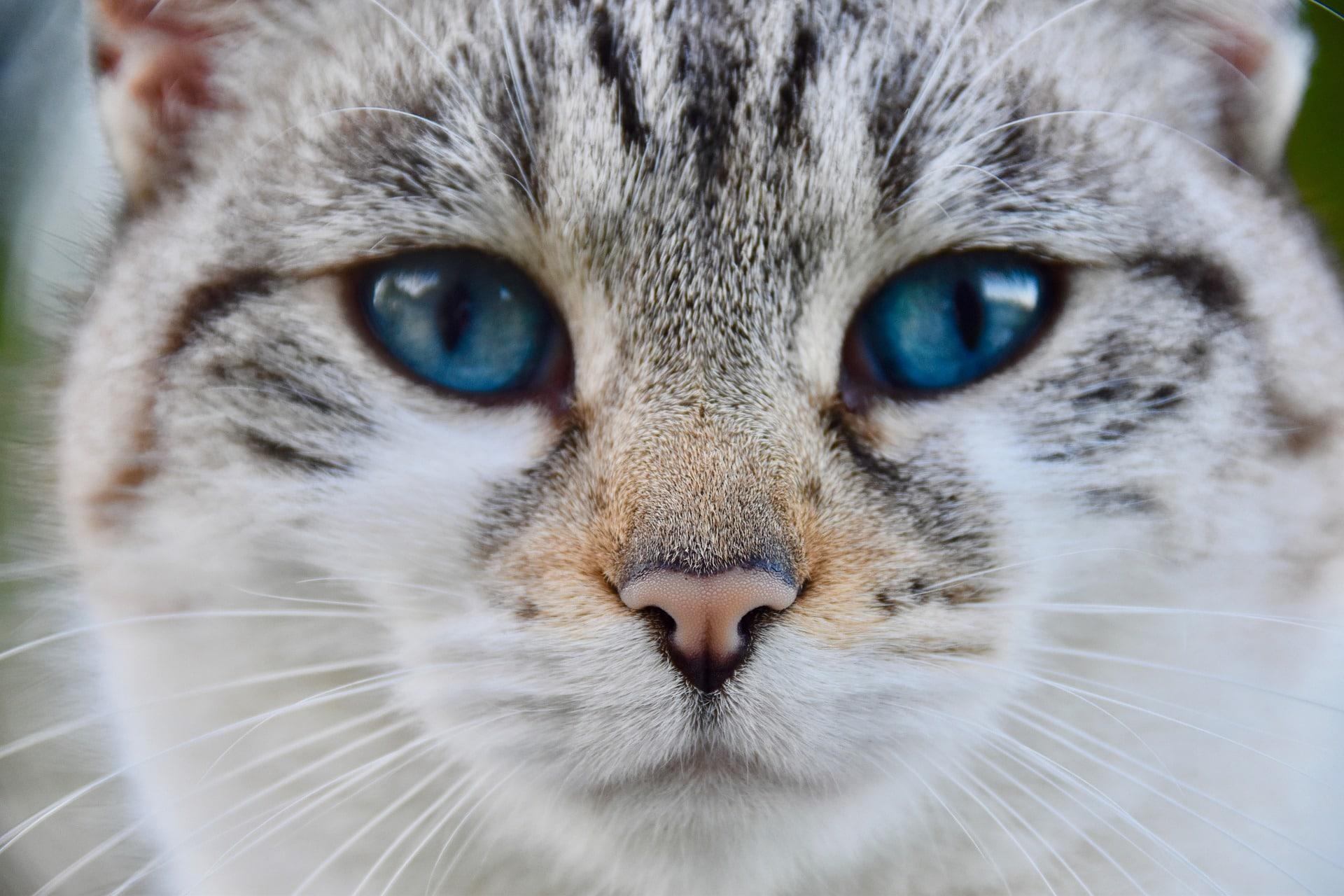 La castración en gatos dura sobre unos 60 minutos