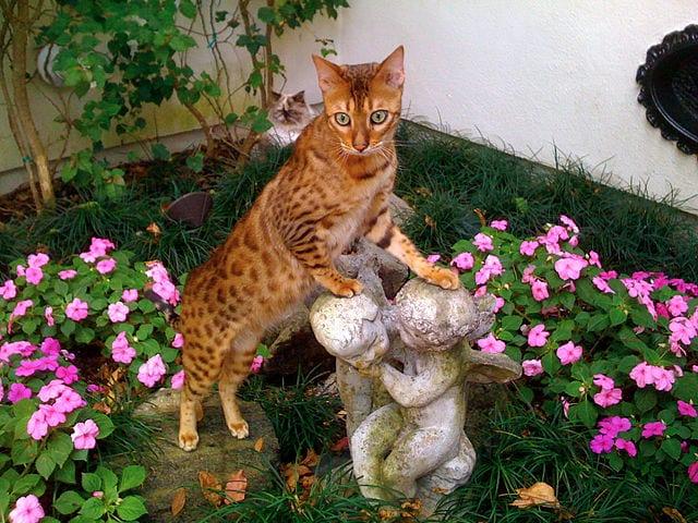 Un gato de bengala entre flores