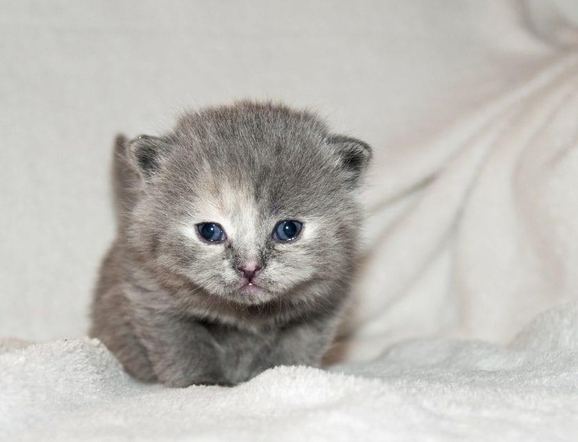 Gatito con los ojos abiertos