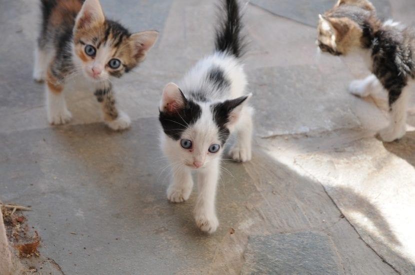 Los gatitos en la calle lo pasan mal