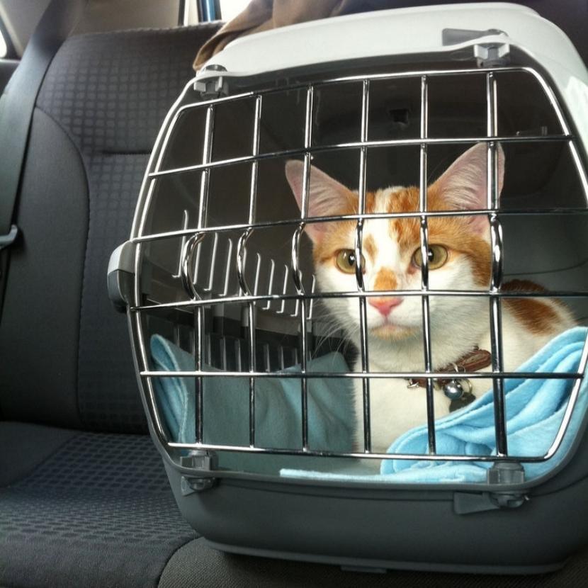 Gato en un transportin