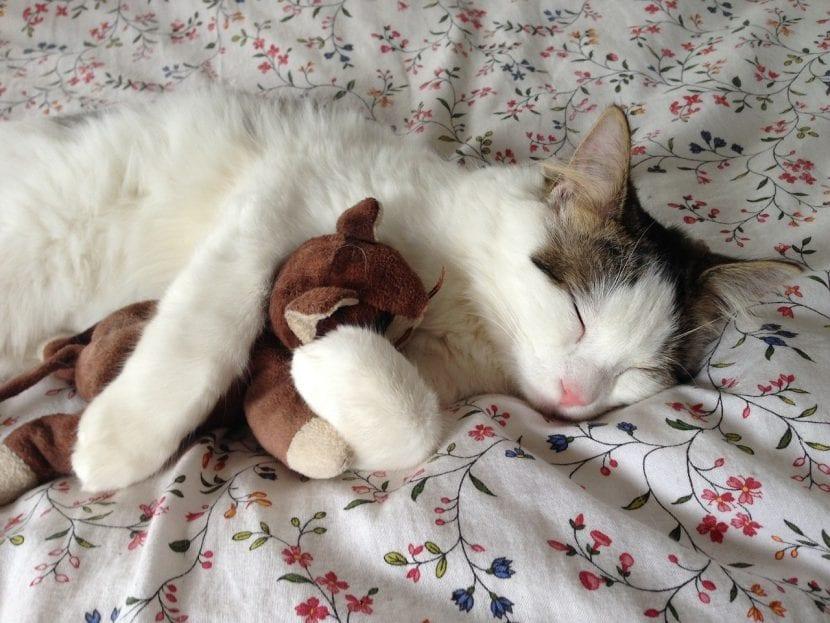 Gato durmiendo con su peluche