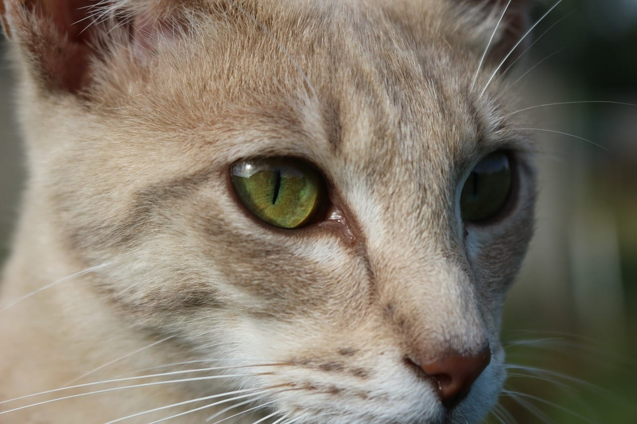 Gato joven