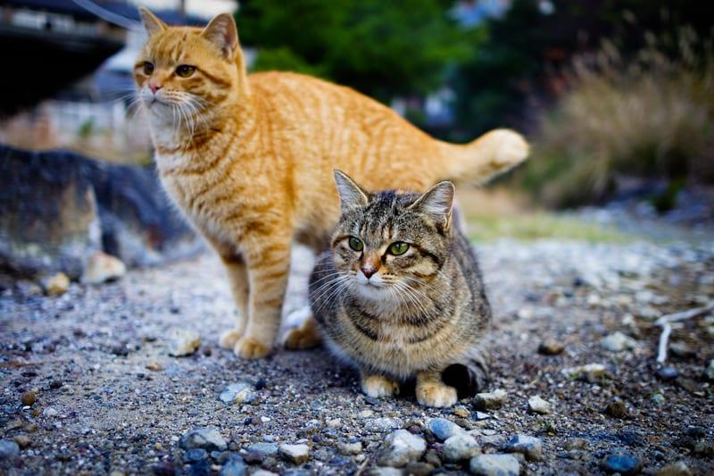 Los gatos en la calle necesitan ser libres y respetados