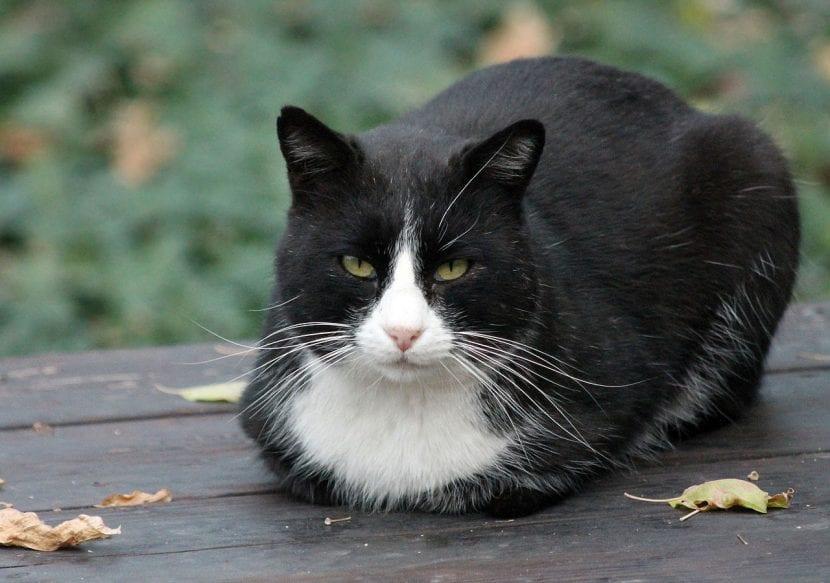 Gato callejero en Madrid