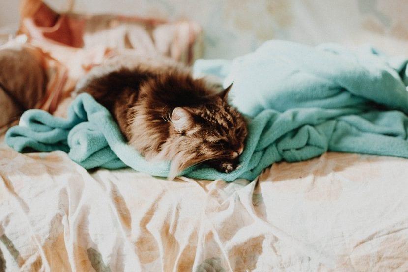 Gato abrigado
