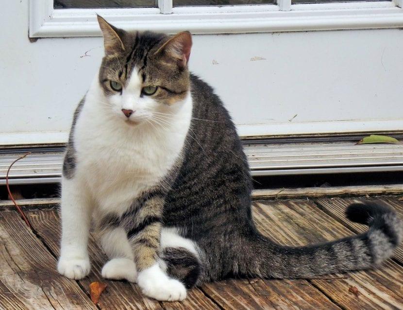 Gato atigrado delante de una puerta