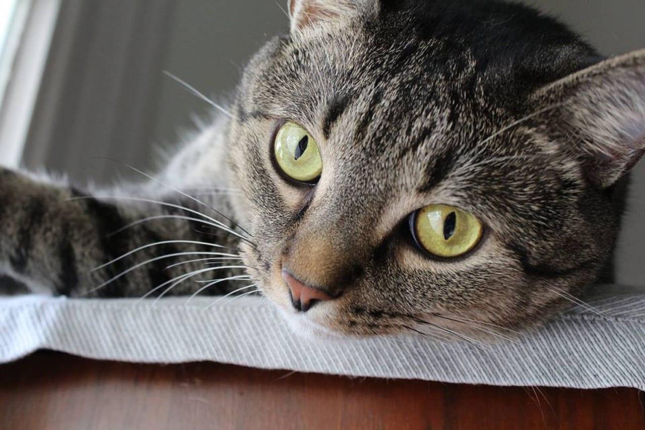 c mo tener un gato en un piso