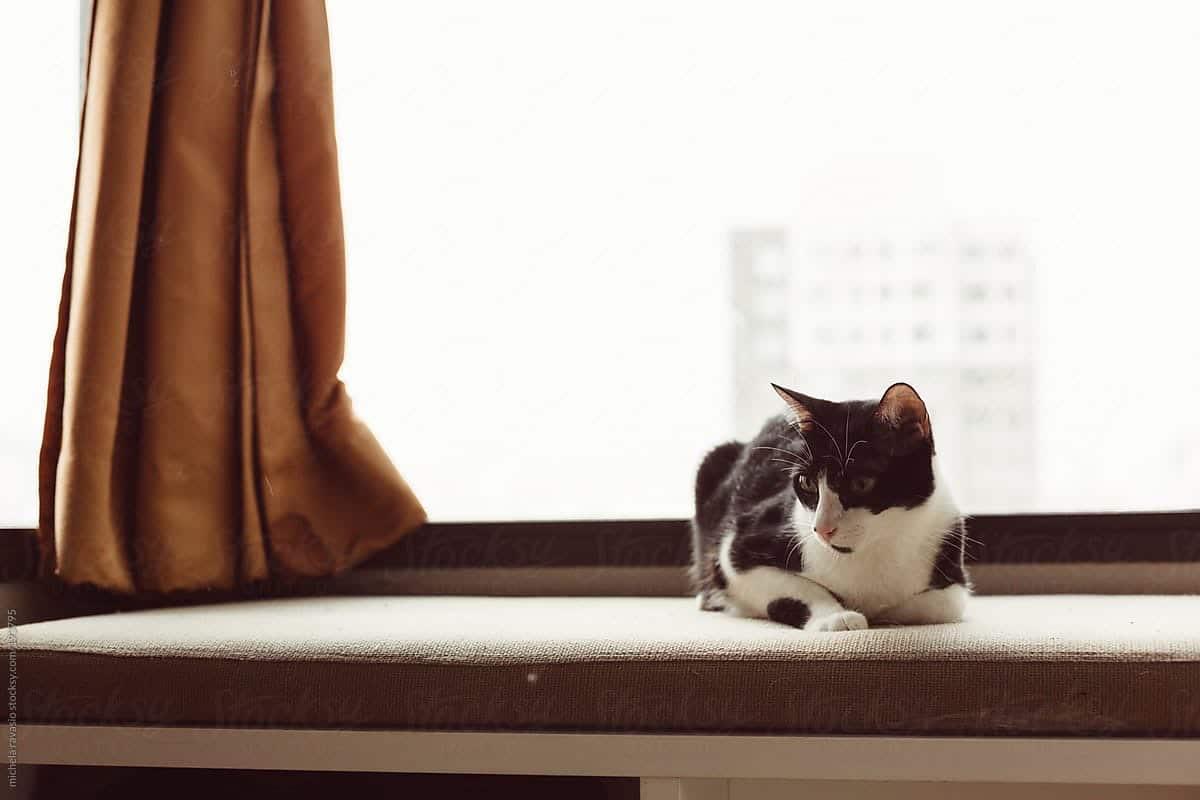 gato en un sofa, junto a la ventana