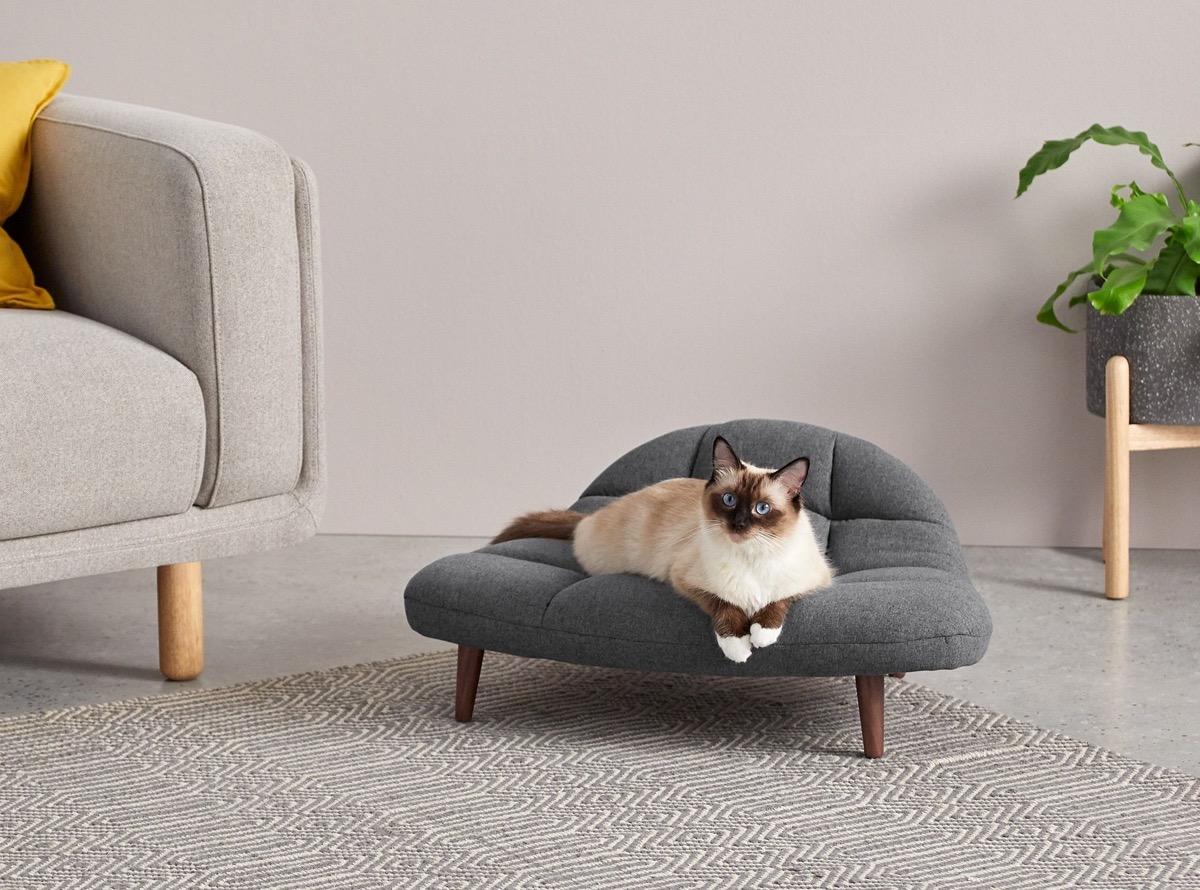 gato sobre un sofá