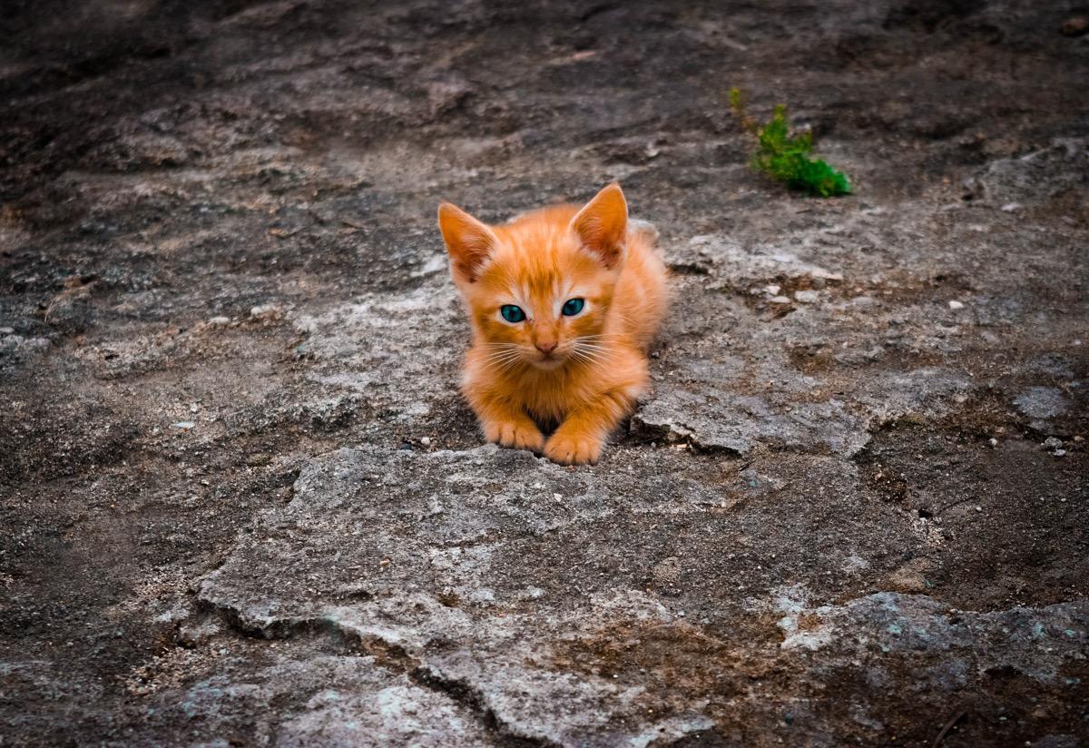 Gato pequeño esperando en la calle