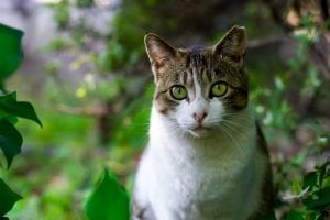 Gato adulto silvestre