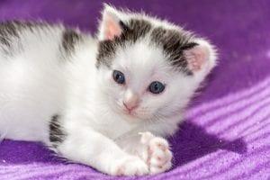 Bebé de gato