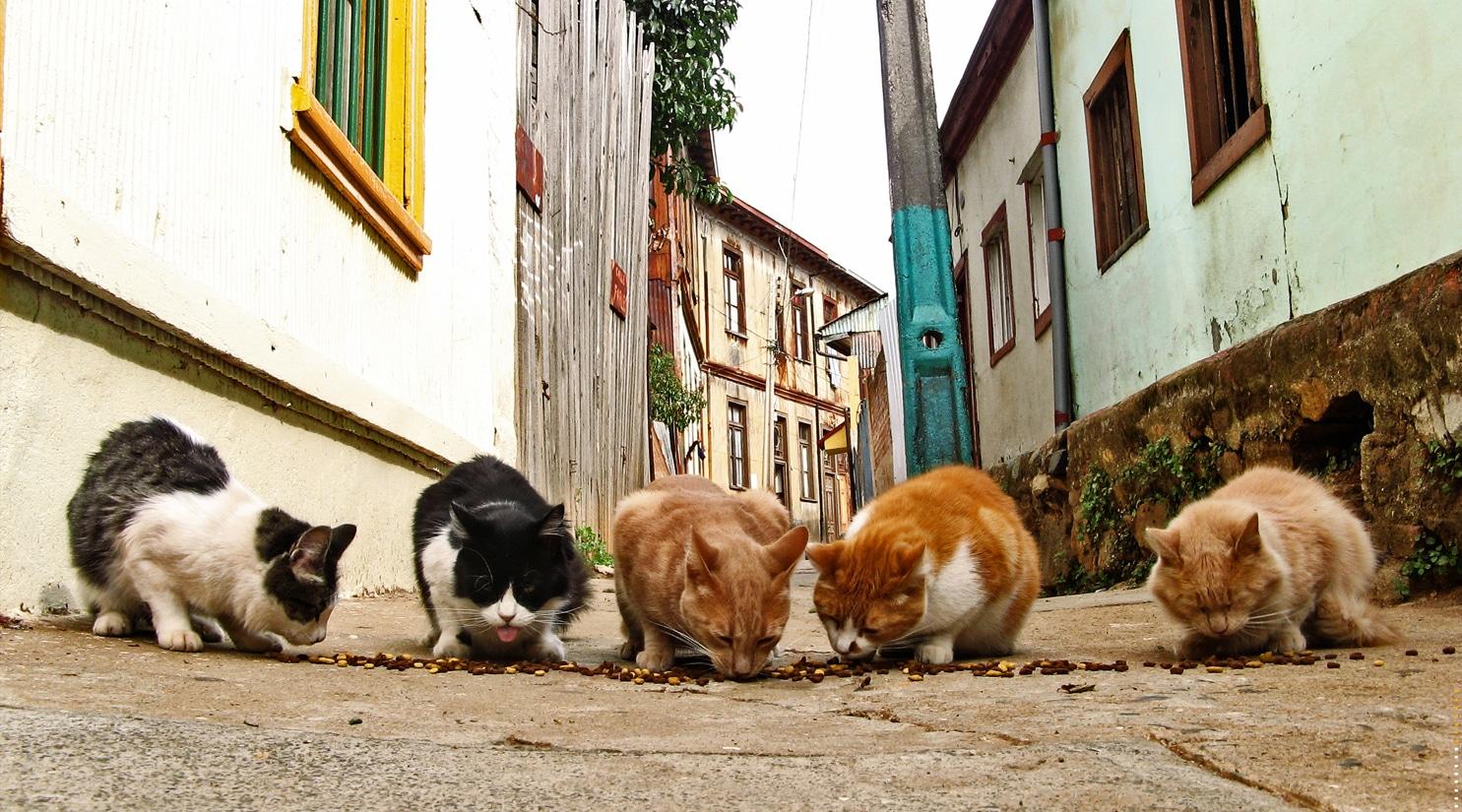 Ayuda a los gatos callejeros