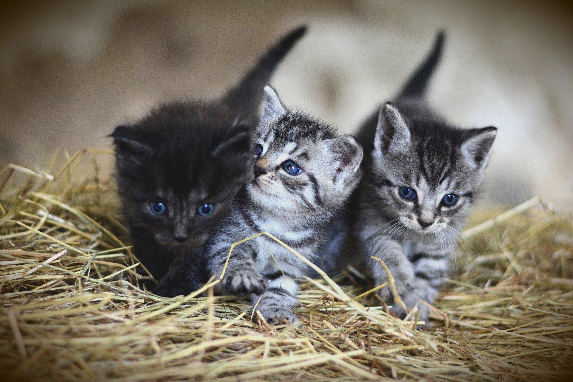 Los gatitos son animales de rápido crecimiento