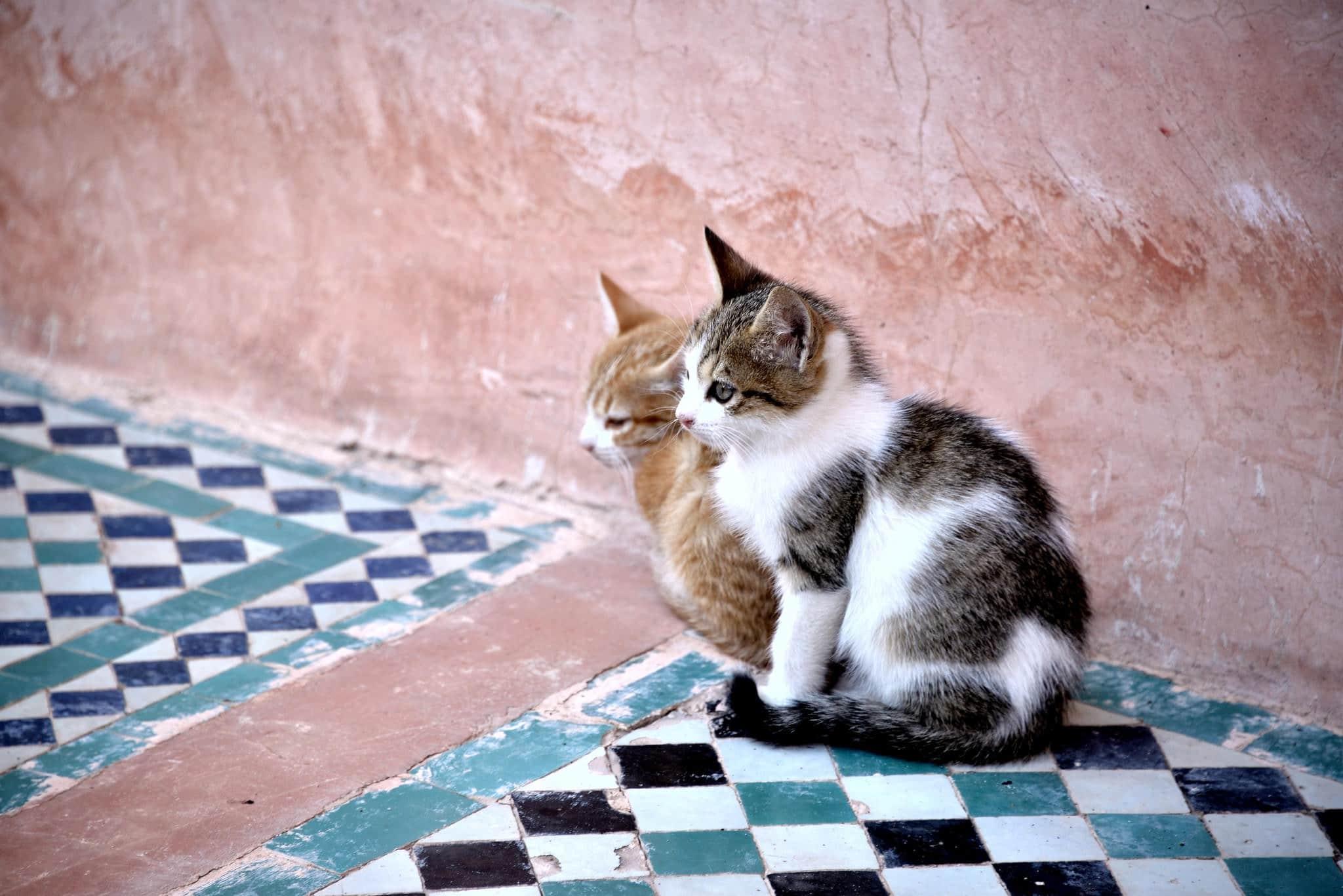 Los gatos callejeros necesitan ayuda