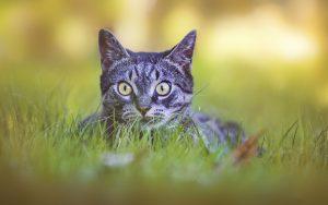 Ayuda a tu gato a superar el miedo