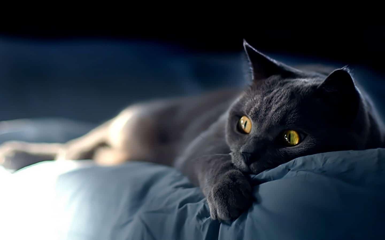 Un gato asustado puede atacar