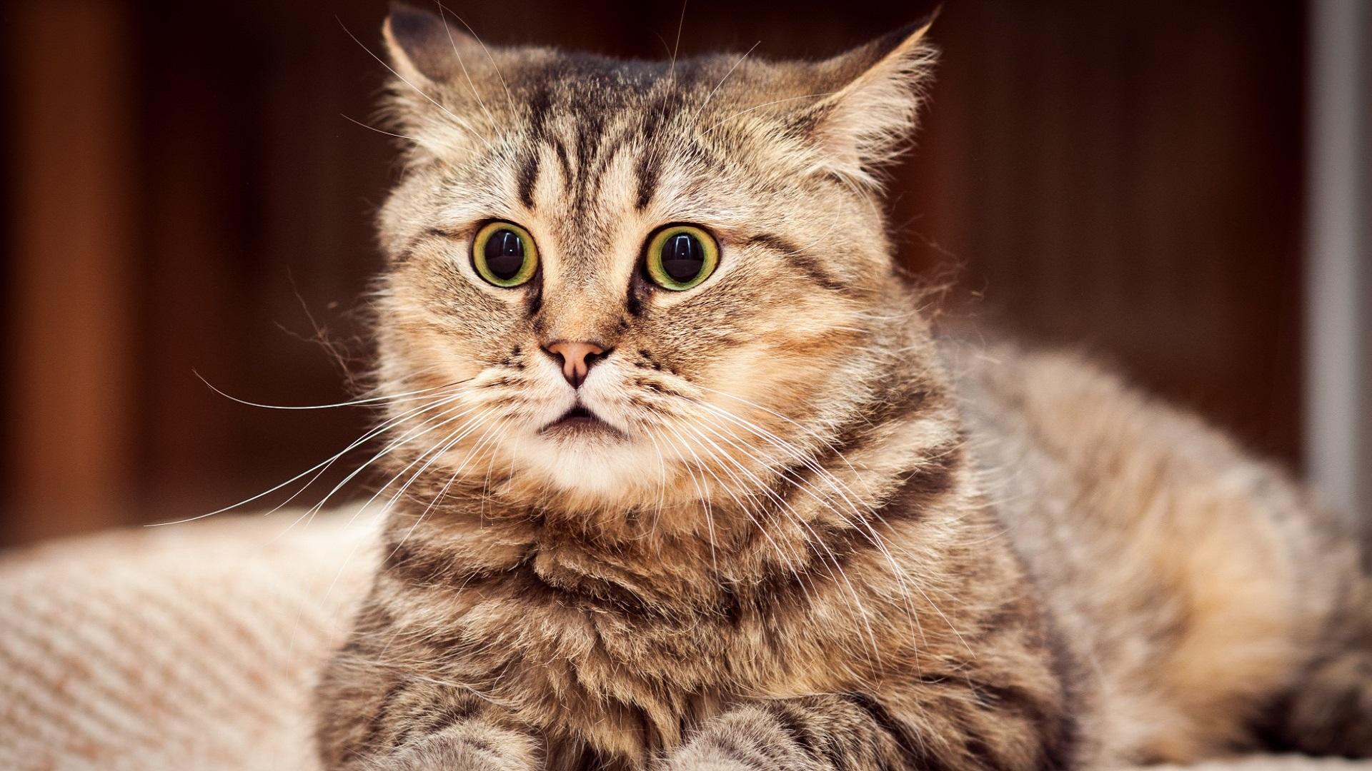 El miedo es un sentimiento natural en gatos
