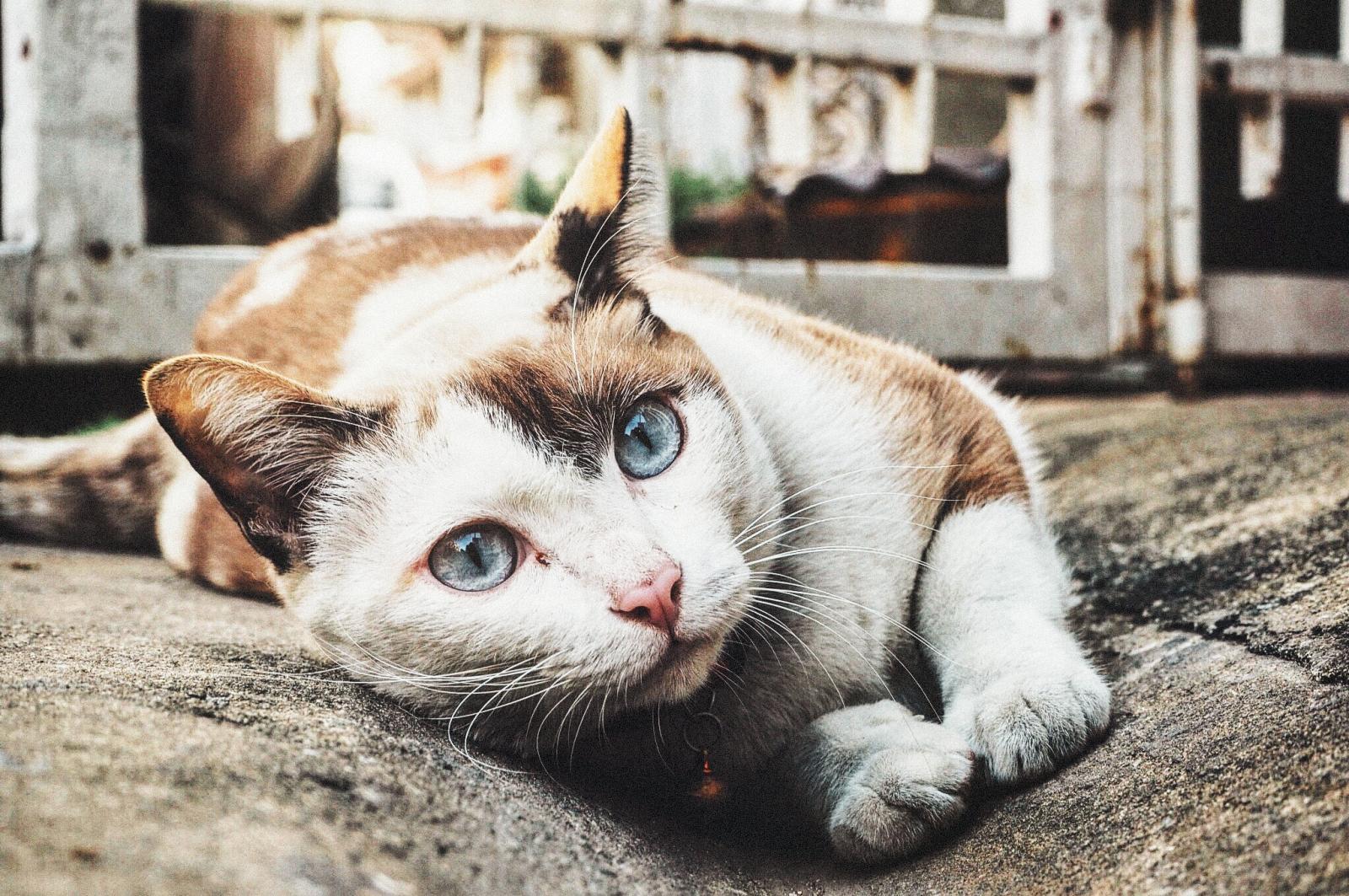 Cuida de una colonia de gatos