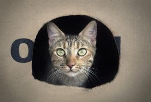 Gato dentro de una caja