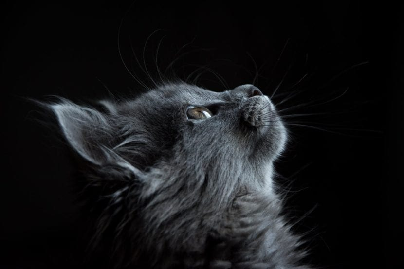 Los gatos pueden vivir en casa