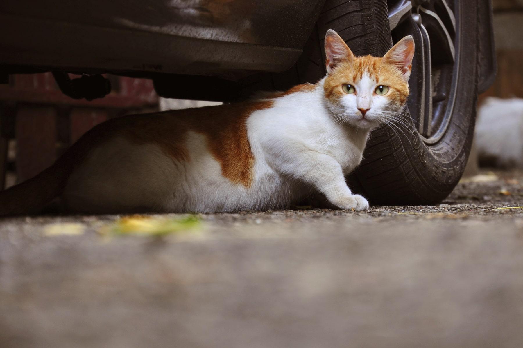 Los gatos en la calle necesitan ayuda