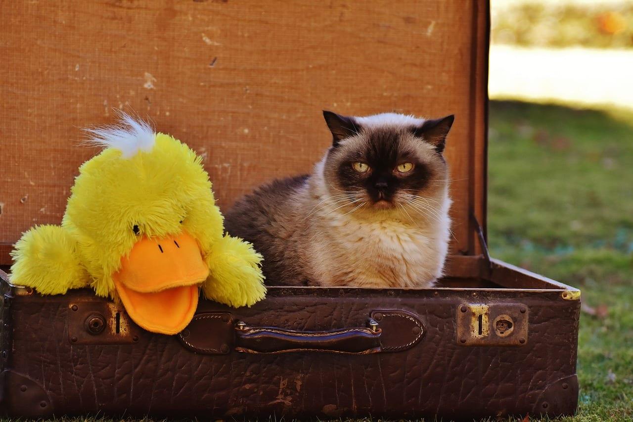 Gato en la maleta