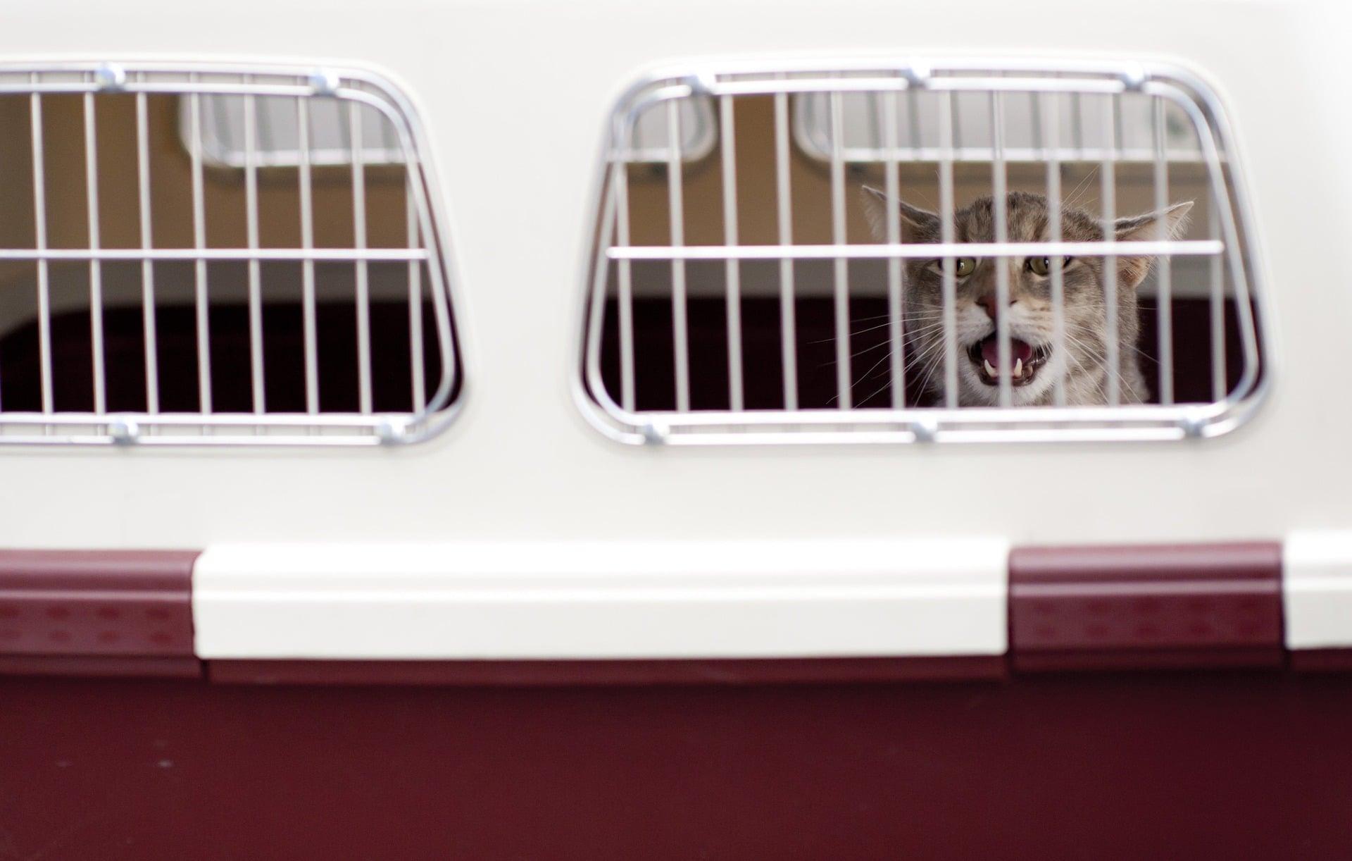 El gato debe ir en un transportín homologado