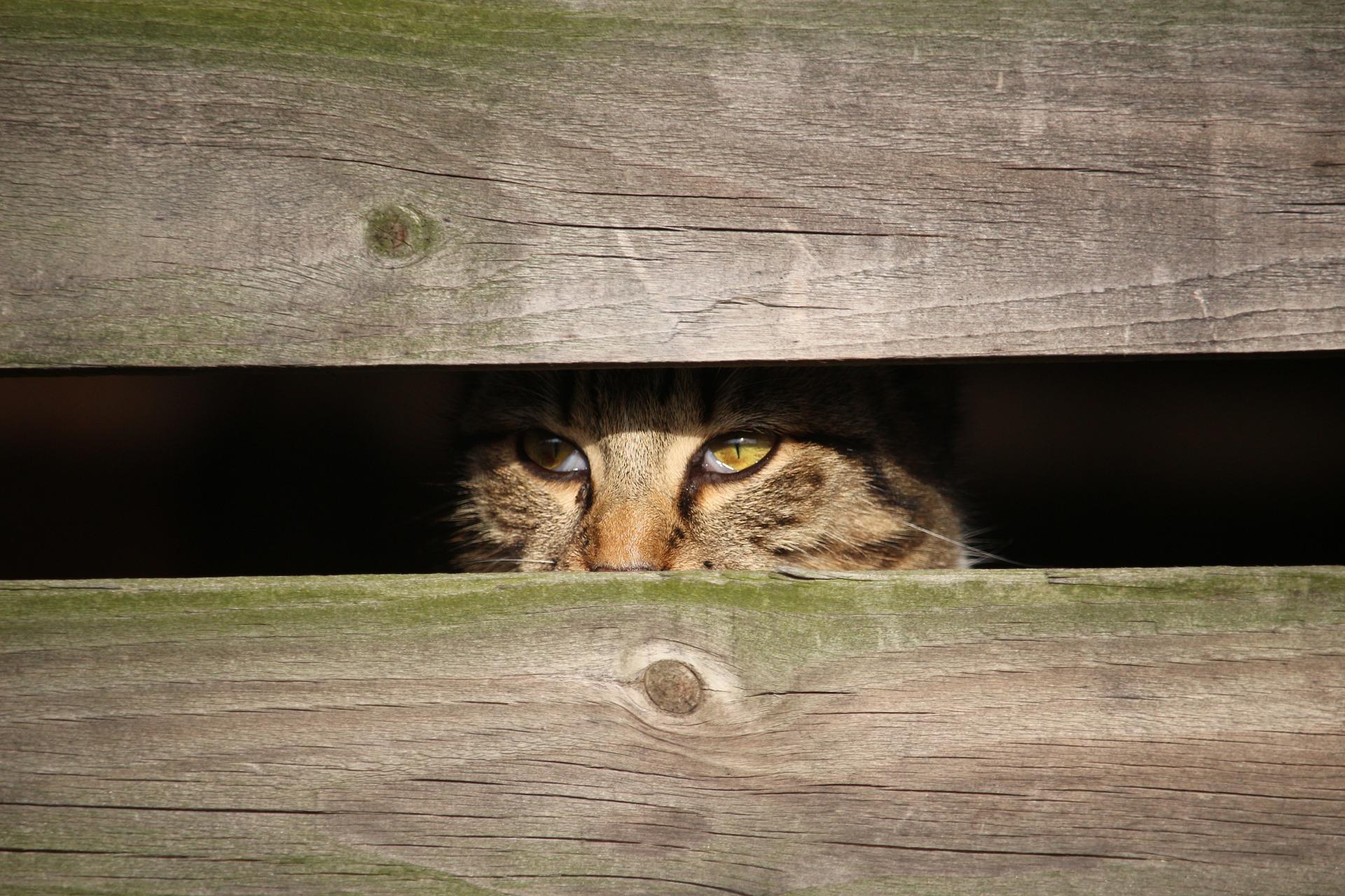 Los gatos asustados necesitan ayuda