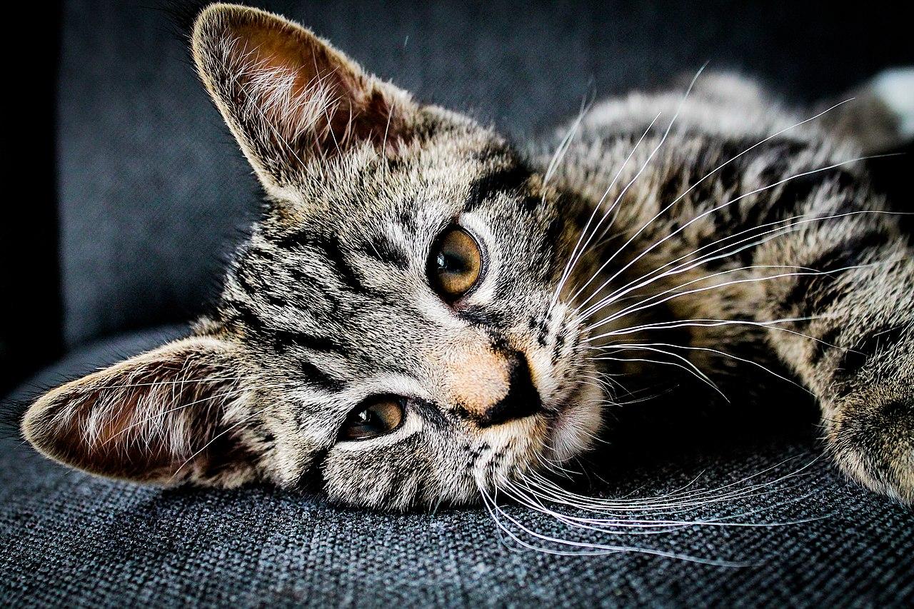 No hay que ponerle colonia a un gato
