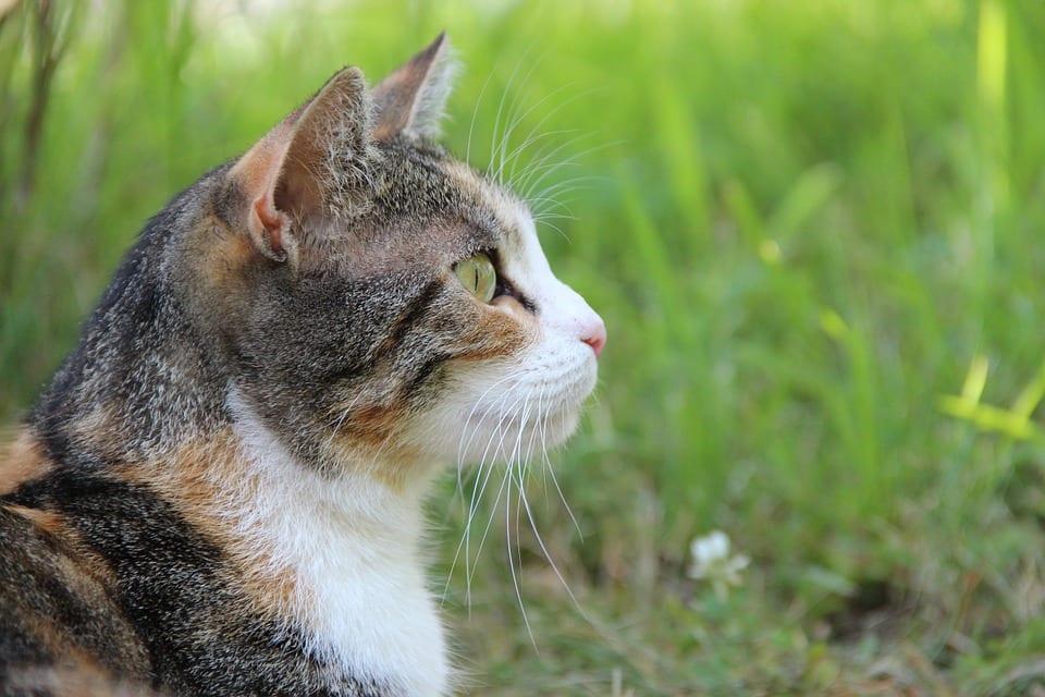 Cómo Desparasitar Gatos Callejeros Noti Gatos