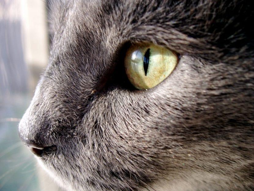 Precioso gato