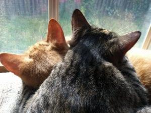 Dos gatos durmiendo juntos