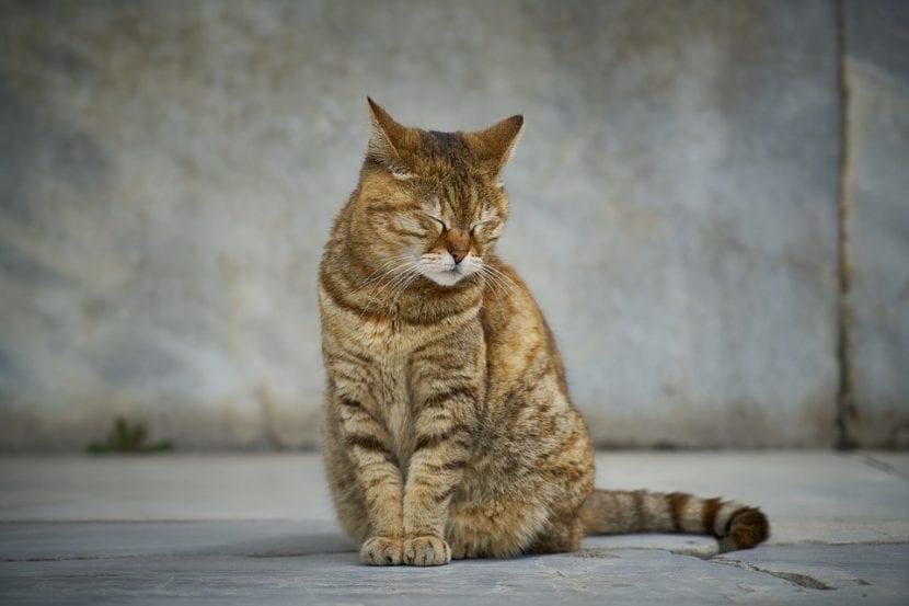 Gatito atigrado en la calle