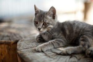 Gatito en su casa