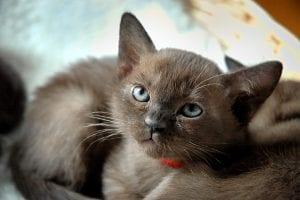 Gatito joven en su casa