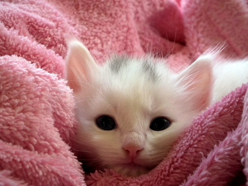 Gatito sobre manta