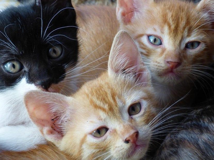 Los gatitos son unas bolas de pelo traviesas por naturaleza