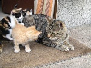 Los gatitos son muy inquietos por naturaleza