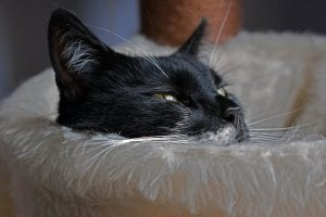 Gato blanco y negro triste