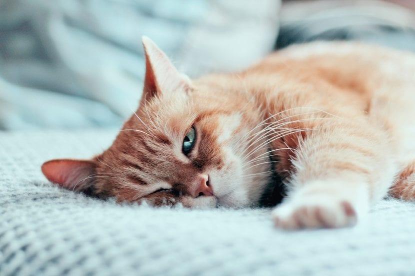 Los gats nos miran cuando dormimos