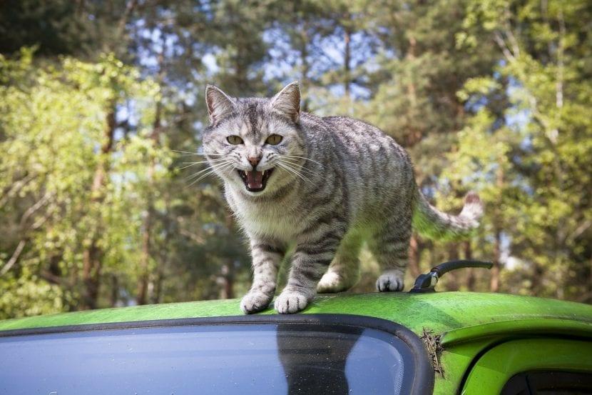 Gato encima de un coche