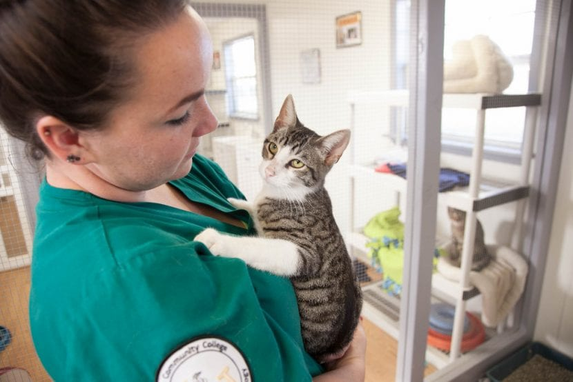 Gato joven en el veterinario