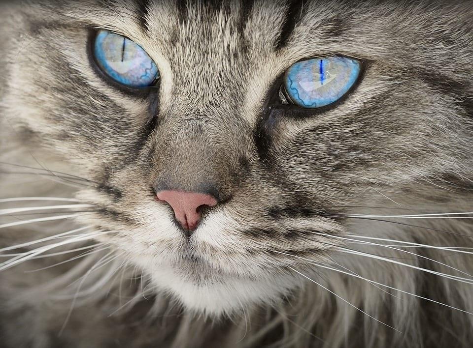 La nariz del gato ha de estar ligeramente húmeda