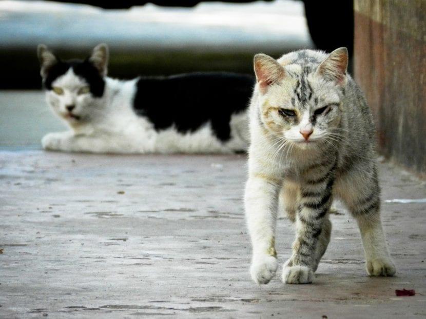 Gatos callejeros enfermos