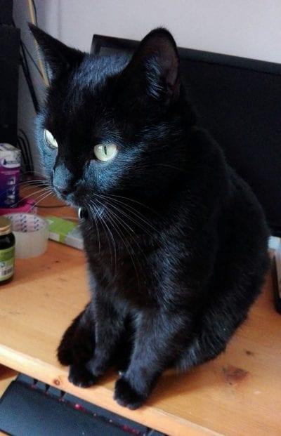 Mi gato Benji