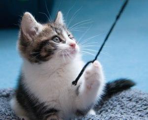Los gatitos necesitan quemar toda la energía que acumulan durante el día