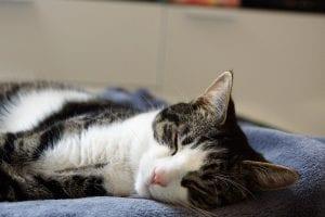 Gato durmiendo sobre una manta