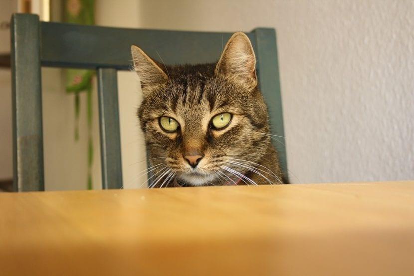 Los gatos se suben a los muebles